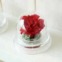 [시들지 않는 영원함 프리저브드 플라워] 아크릴돔-카네이션 (RED)
