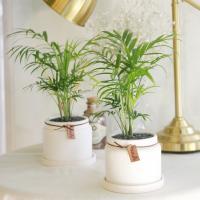 네이쳐 라벨 화분 테이블야자 공기정화식물