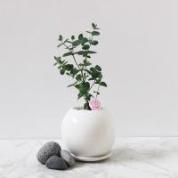 이노퓨어-유칼립투스 화분