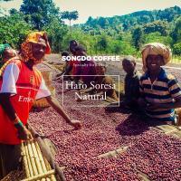에티오피아 구지 함벨라 하로 소레사 내추럴 Ethiopia Guji Hambela Haro Soresa