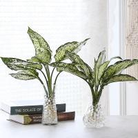 수경재배 스노우 사파이어 공기정화 수중식물