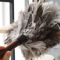 [2HOT] 타조털 먼지털이개