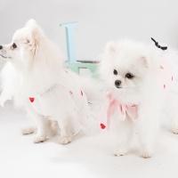 [봉봉펫닷컴] 강아지 러블리 레이스 하트 드레스