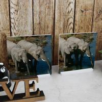 pf096-스탠드액자2P-코를손처럼사용하는코끼리