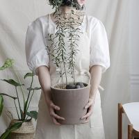 올리브나무 인테리어 식물 이태리토분 반려식물