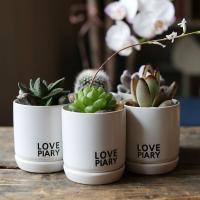 블랙앤화이트 다육미니화분 실내공기정화식물-3종세트