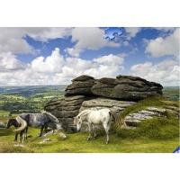 2000조각 직소퍼즐▶ 타트무어의 말들 (RA16634)