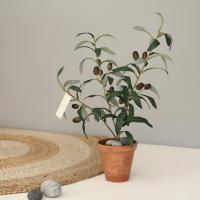 나의 작은 올리브나무