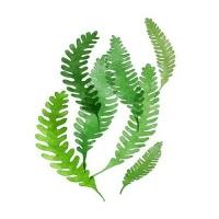 [DIY명화]Q3223 Leaf(잎) size 40*50cm