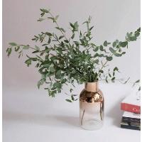 [디어먼트] 파블로 향 유칼립투스 공기정화식물
