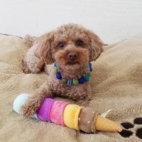 [PetToy]Love Pet Squeaky_Giant Ice Cream