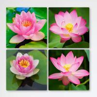 tf270-멀티액자_물위에떠있는연꽃