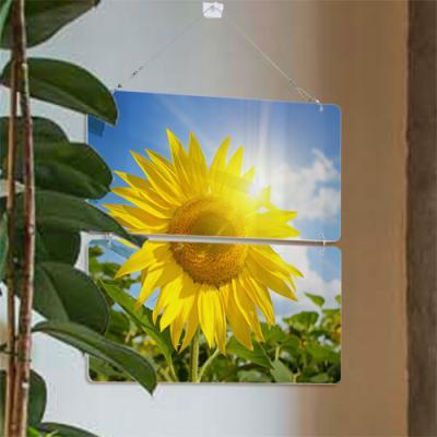 nk005-햇살가득한해바라기(2단)