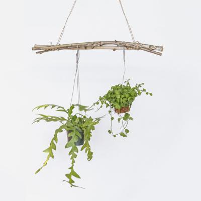 자작나무 행잉식물 나뭇가지가랜드 3p