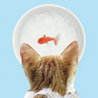 [썩유케이] 강아지 고양이 물그릇 식기