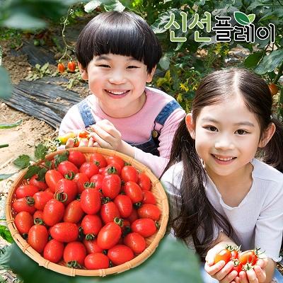 신선플레이 대추방울토마토 3kg 1번 고당도 토마토