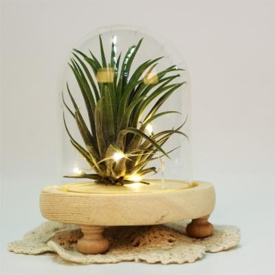 LED 쁘띠 유리돔