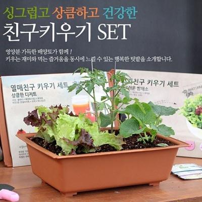 새싹키우기 재배 채소키우기 세트