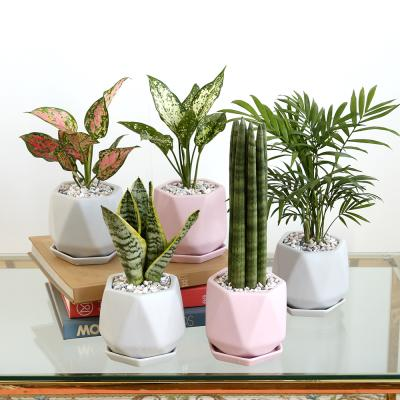 리솜 컬러 화분 공기정화식물 모음전 8종