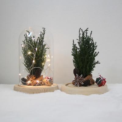 크리스마스 트리 무드등-프리저브드