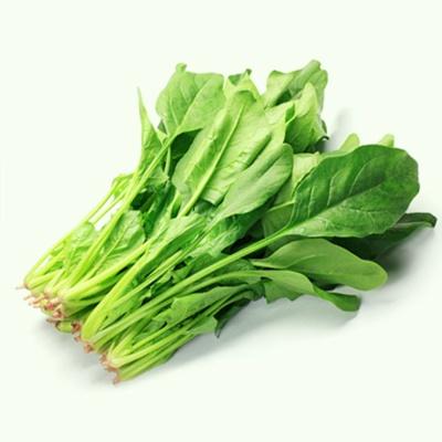 건강 시금치 야채 채소 식물 씨 종자 씨앗 20g