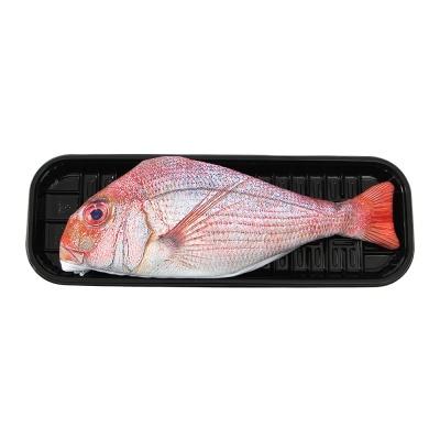 리얼 생선 참돔 펜슬케이스