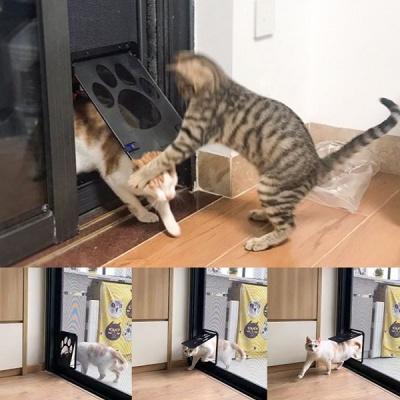 온나 애견 베란다 펫도어 고양이 출입문