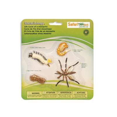 662616 모기의성장과정 Life Cycle of a Mosquito