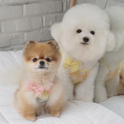 강아지나시 강아지여름옷 레인보우나시