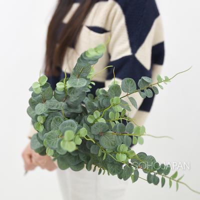 초록색 유카리 가지