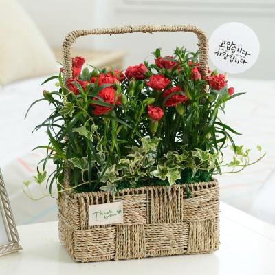 EV11059 카네이션꽃밭/카네이션화분 어버이날 꽃배달