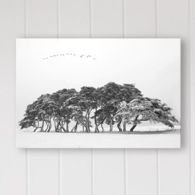 cq266-흑백소나무_가로_중형노프레임