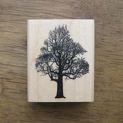 [나무 and 잎]나무-1