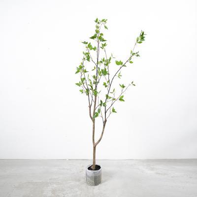 동백나무 150cm