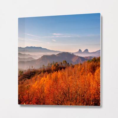 pb346-폼아크릴액자56CmX56Cm_가을이물든자작나무숲