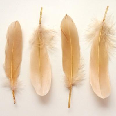 베이지깃털(M) 5p