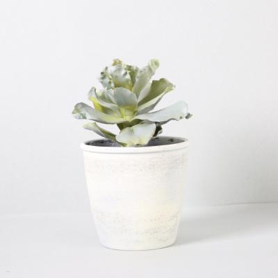 다육식물 다육이 미니화분 싱글다육 20cm