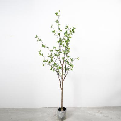 동백나무 210cm