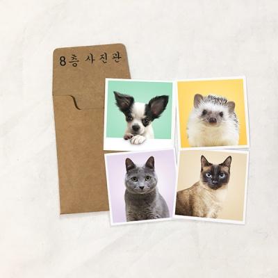 반려동물 증명사진 정사각형4*4 (6장)