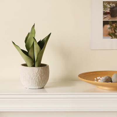[plant] 문샤인 뉴트럴 식물화분