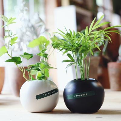 실내공기정화식물 블랙앤화이트 수경재배식물 2종세트
