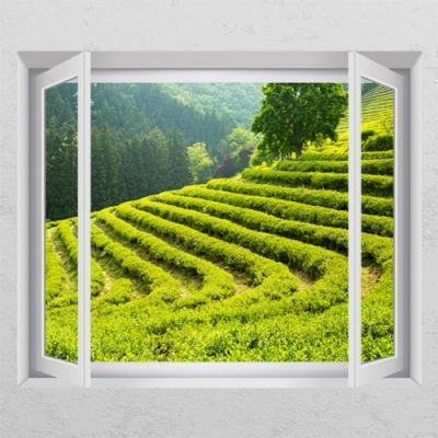 cr802-초록초록녹차밭_창문그림액자