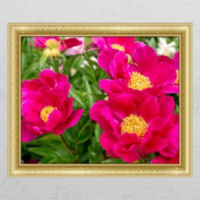 ta639-풍수붉은모란꽃02_창문그림액자