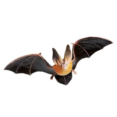 266829 타운센트큰귀박쥐 Townsend`s Big-eared Bat