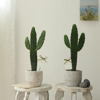 [plant] 응원해요 대박선인장 화분set [2color]