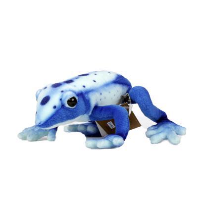 5220번 청독화살 독개구리 Blue Poison Dart Frog/17cm.L