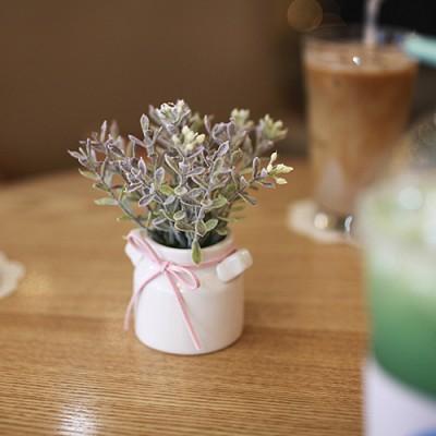 초크베리 우유병화분