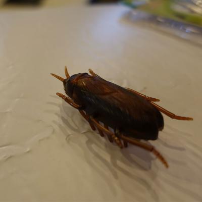 기어가는 진동 바퀴벌레