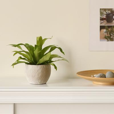 [plant] 아비스 뉴트럴 식물화분