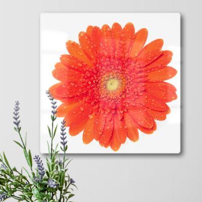 id886-폼아크릴액자38CmX38Cm_아름다운꽃붉은거베라